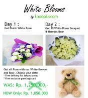 white_blooms_kadoplus-val